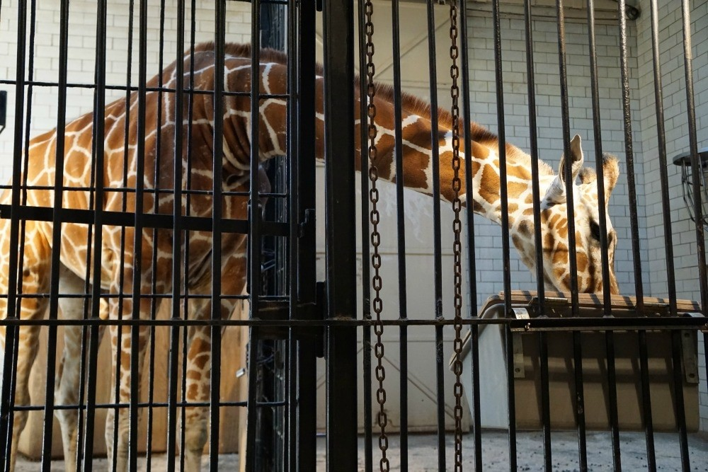 What To Do In St. Louis St. Louis Zoo